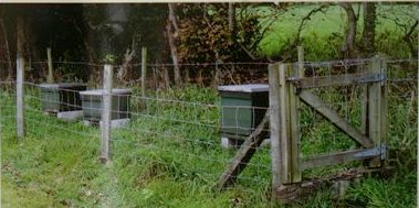 Hives with stock proof fence